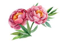 Peonies, Wedding Bouquet, Wate...