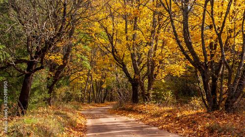 Foto auf Gartenposter Straße im Wald Puszcza Knyszyńska, Polska złota jesień, Podlasie, Polska