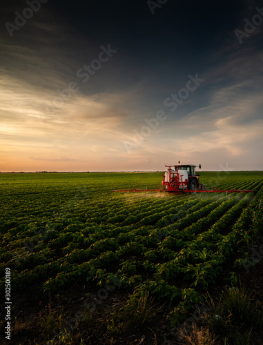 Obraz Tractor spraying soybean field in sunset. - fototapety do salonu
