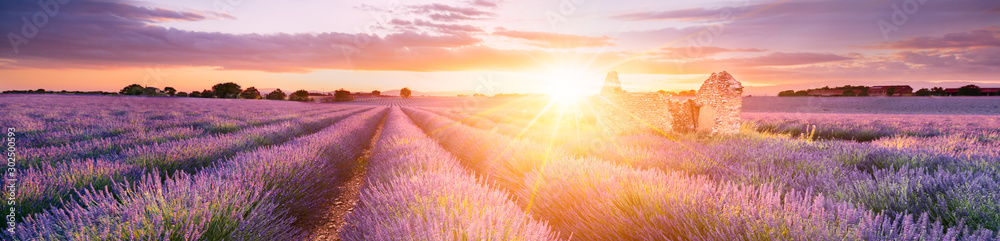 Fototapeta LAVENDER IN SOUTH OF FRANCE