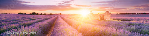 Keuken foto achterwand Landschap LAVENDER IN SOUTH OF FRANCE