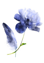 Watercolor Flowers And Feather, Isolated On White Background
