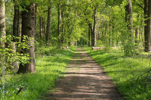 Fototapeta Beautiful path though an ancient woodland or forest outside Guildford, Surrey.  UK obraz