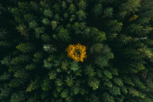 Autumn Forest Aerial View. Col...