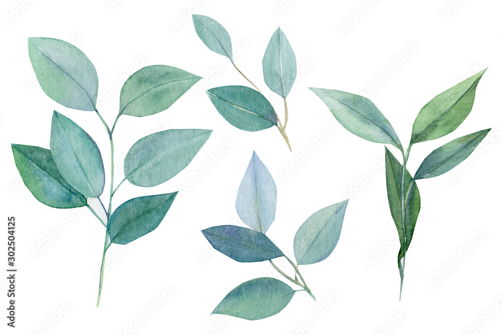 Fototapeta set of green elements, branches and leaves of eucalyptus, watercolor painting, hand drawing,