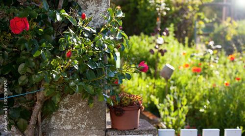 Petit jardin fleuri en France. Fototapet