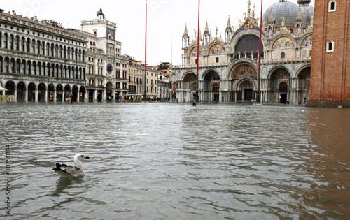 Fototapeta water of Adriatic Sea in Saint Mark Square In Venice with a seag obraz
