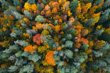 Aerial View Of Forest In Autum...