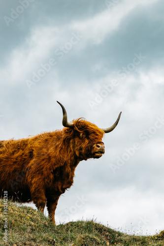 Cuadros en Lienzo Islay Scotland