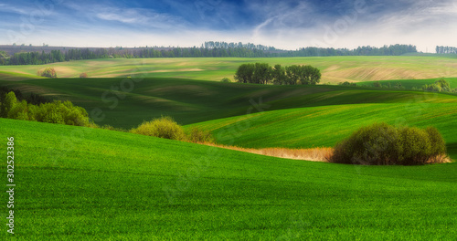 Obraz picturesque hilly field. agricultural field - fototapety do salonu