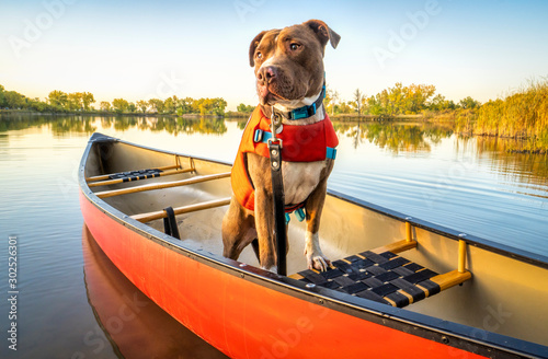 canoe paddling with pit bull dog Wallpaper Mural