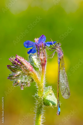 Recess Fitting Butterfly Macro shots, Beautiful nature scene damselfly.