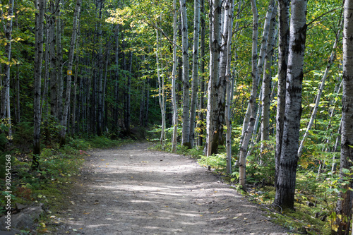 Fototapety, obrazy: A hike in the woods. A path in a national park in the Charlevoix region of Quebec, Canada.