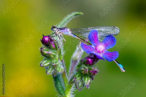 Fotobehang Vlinder Macro shots, Beautiful nature scene damselfly.