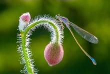 Macro Shots, Beautiful Nature Scene Damselfly.