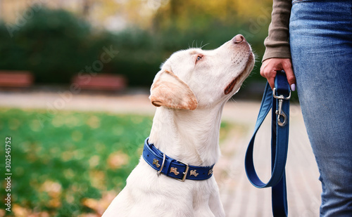 Friendship between human and dog. Pets and animals concept Canvas Print