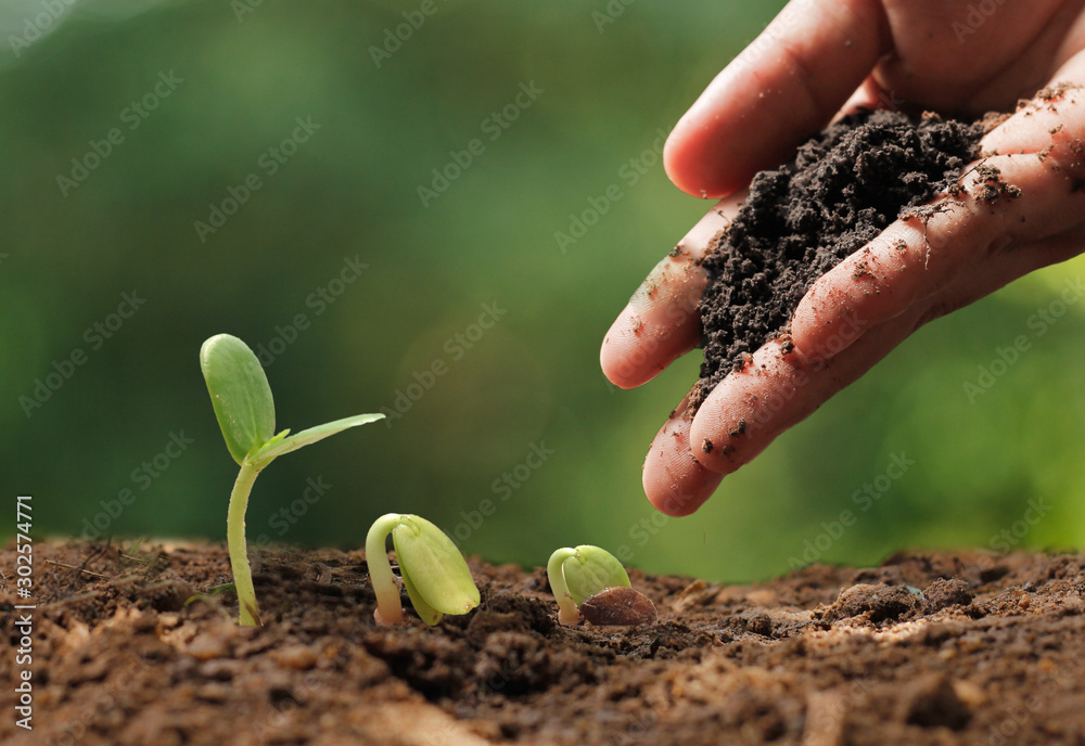 Fototapety, obrazy: Agriculture. Growing plants. Plant seedling