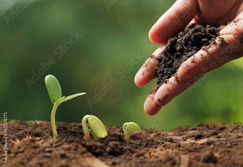 Obraz Agriculture. Growing plants. Plant seedling - fototapety do salonu