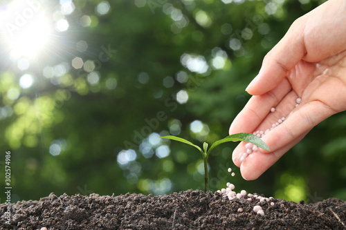 hand of a farmer giving fertilizer to young green plants / nurturing baby plant Canvas Print