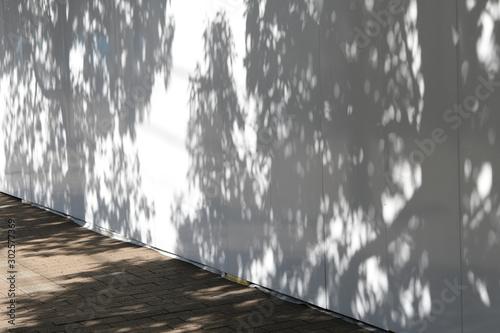 壁の樹木の影 Canvas Print