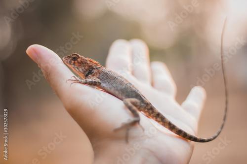 chameleon on hand in Thailand, dragon. Canvas Print