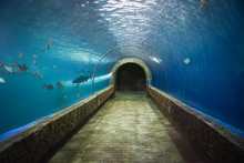 Fish Tunnel At The Aquarium Underwater - Different Types Of Fish Swimming Aquarium Tank
