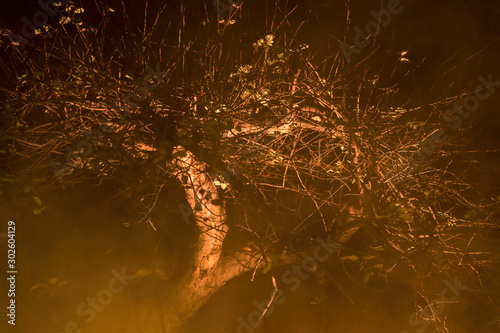 A gnarly, mysterious looking tree on a foggy moonless night, Upstate New York Canvas-taulu
