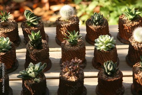 Photograph of cute little succulent plant