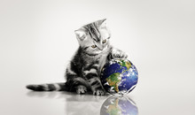 Grey Kitten Touch Paws Globe