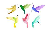 Small Bright Colorful Hummingb...