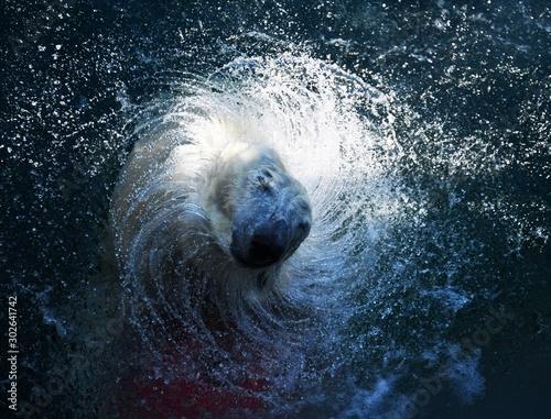 Recess Fitting Polar bear Eisbär im Wasser