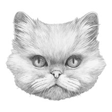 Portrait Of Persian Cat. Hand-drawn Illustration. Vector Isolated Elements.