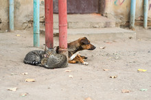Street Cats And A Dog Lie Toge...