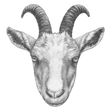 Portrait Of Goat. Hand-drawn Illustration. Vector Isolated Elements.
