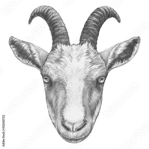 Fotografia Portrait of Goat