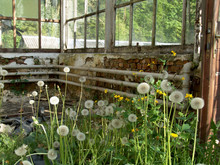 GLASHAUS . GREENHOUSE