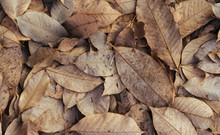 Dry Leaves On Floor Background