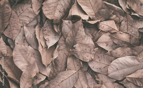 Foto op Plexiglas Brandhout textuur Dry leaves on floor background