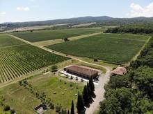 Aerial Flight Over Beautiful Vineyard Landscape In Tsinandali, Georgia