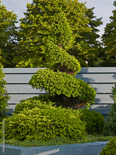 Conifers with topiary display in a raised terred border in a show garden