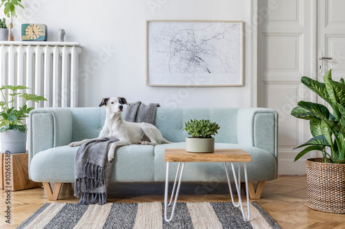Stylish scandinavian living room interior of modern apartment with mint sofa, design coffee table, furnitures, plants and elegant accessories. Beautiful dog lying on the couch. Home decor. Template.