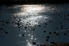 水鳥がいる夕暮の湖面