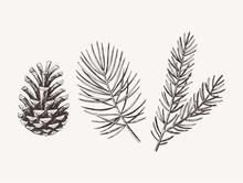 Hand Drawn Conifer Branches An...