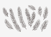Hand Drawn Conifer Branches Set. Vector Botanical Illustration Of Pine And Spruce Branches