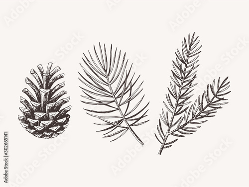 Hand drawn conifer branches and cones Fototapeta
