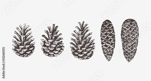 Fotografering Hand drawn conifer cones