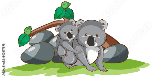 Spoed Foto op Canvas Kids Isolated picture of koala