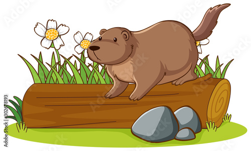 Poster Jeunes enfants Isolated picture of groundhog on log