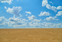 Blue Sky And White Clouds Over The Field