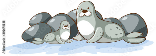 Poster Jeunes enfants Two seals on white background